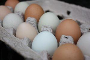 chickens-life-0811-carton-of-eggs-web-jpg