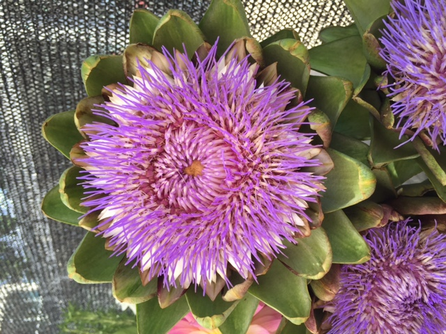 arty flower
